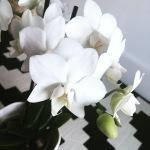 Indoor botanical garden plants